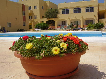 Freehold sea view apartment within private communal gardens with swimming pool  - 200,000€